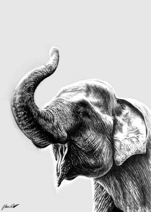 Charcoal Drawing of Sumatran Elephant.pn