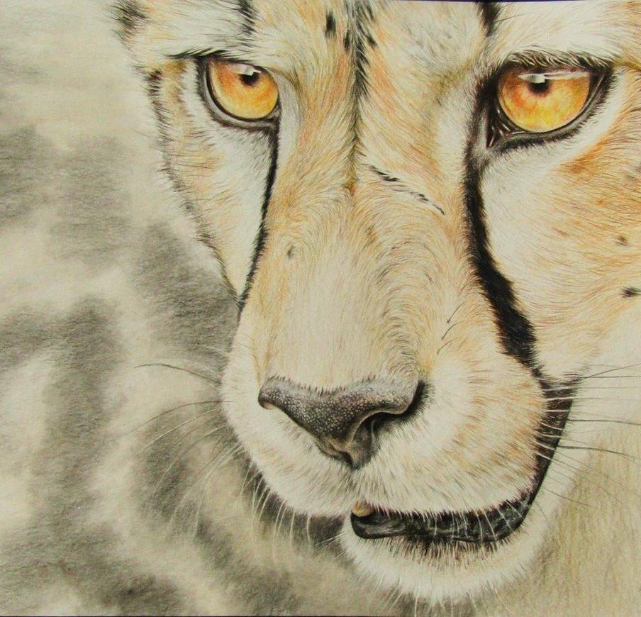 Cheetah - coloured pencil on paper.jpg