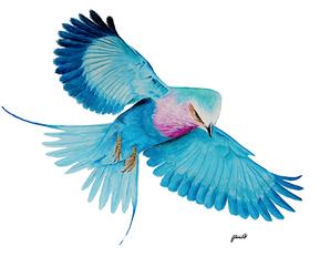 Roller Bird -watercolour.png