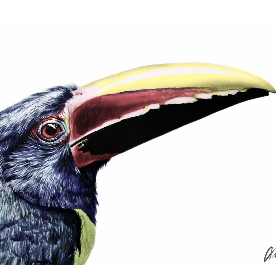 'Green Aracari' watercolour painting