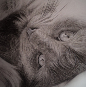 Charcoal sketch of my cat Bumble.jpg