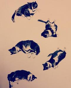 Gerry's Cat