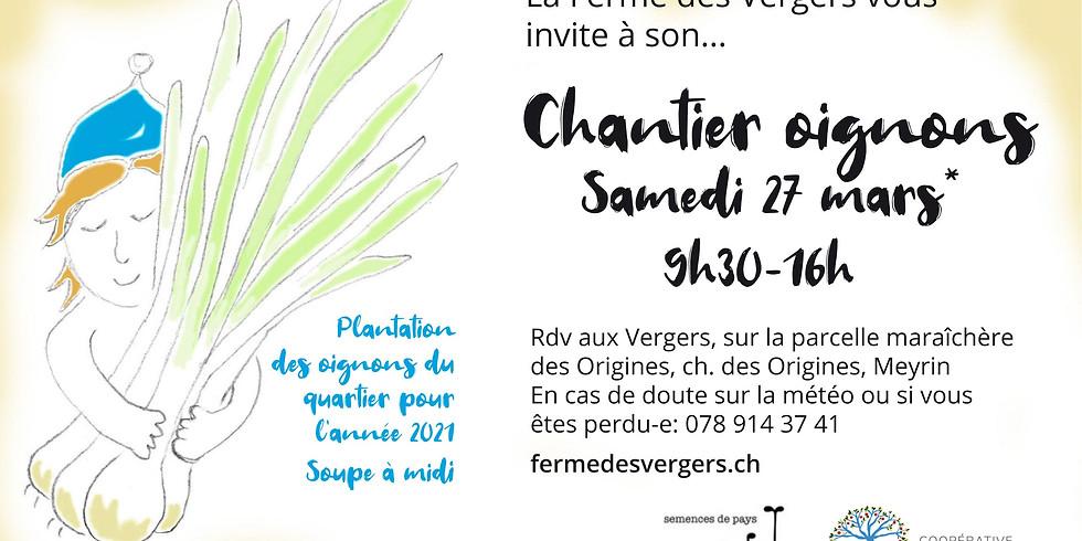 Chantier oignons