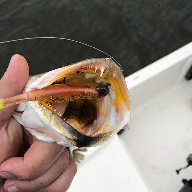 #eyestrikefishing #bassassassin #saltwaterassasin