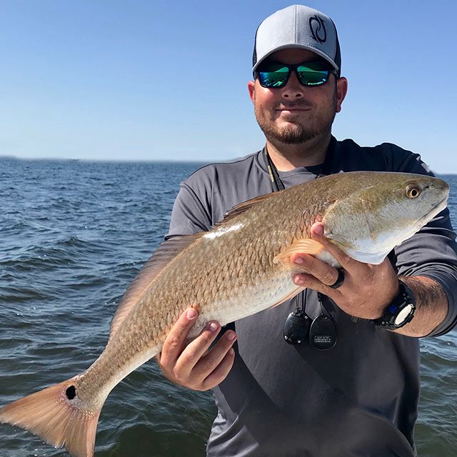 Between the sabines and the assassins, makes it a lot easier to see and catch the reds