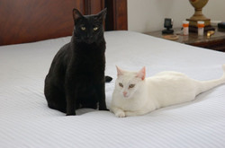 Athena and Nikos
