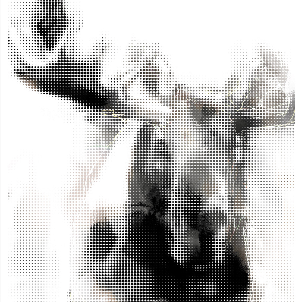 ubu-design-illustration-digitale-moose-d