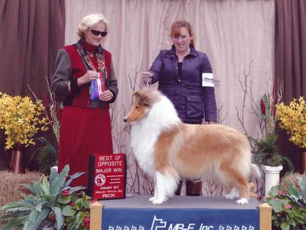Kaymann Collies 1st American Champion