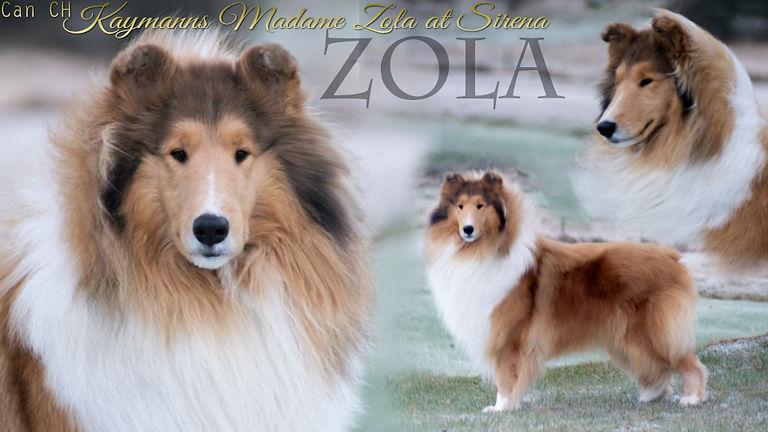 Zola-2y.jpg