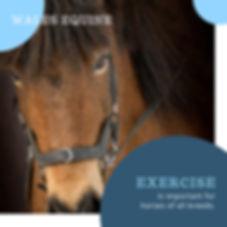 Exercise horses.jpg
