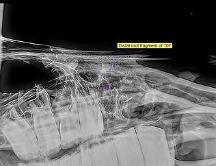 Wasylenko Jasmine 1-29-Oct-2014 (2).jpg