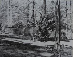 "Geeta Pattanaik / ""Fallen Monarch"" / Pen And Ink / 19x24 / $1500"