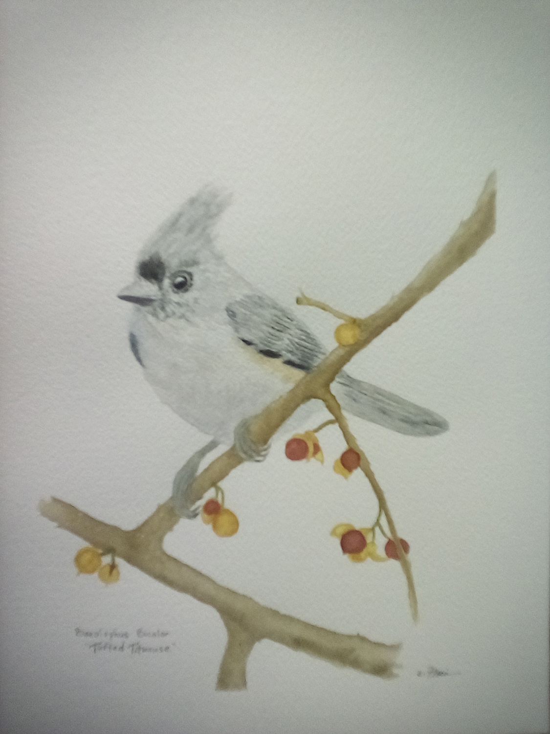 "Esther Florin / ""Tufted Titmouse"" / Watercolor / 9x12 / $800"