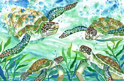 Rescue of the Green Sea Turtles