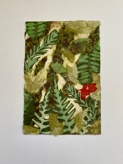 Hidden Rainforest