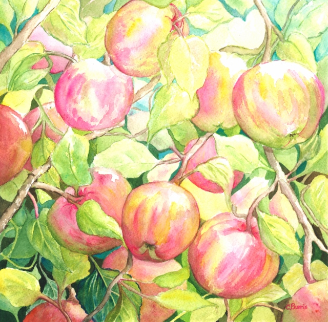 "Cherie Burris / ""Oak Glen Apples"" / Watercolor / 14x14 / $300"