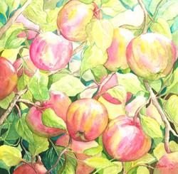 "Cherie Burris / ""Oak Glen Apples"" / Watercolor / 14x14 / $300"