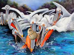 Pelican Escape