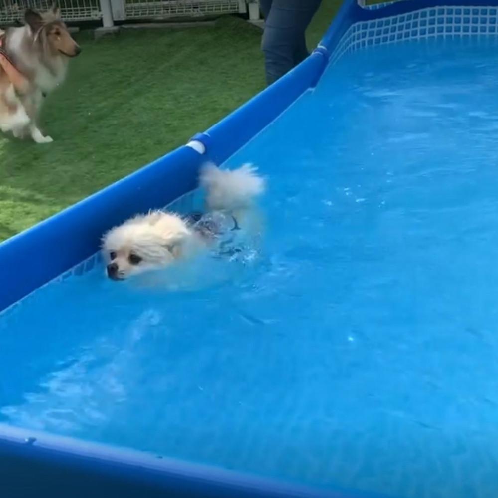 ドッグランクラブ広島のプール