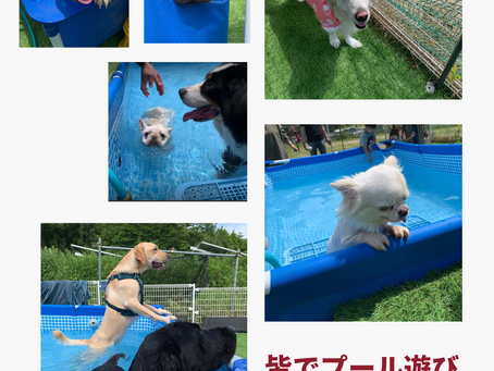 ドッグランクラブ広島 プール第2組🐶♥️🏖️