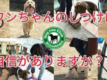 呉 東広島 ドッグランクラブ広島 犬の しつけ教室・遊び方を学べるドッグラン