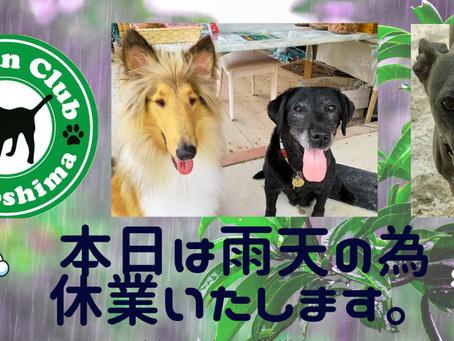 本日は雨のため休業いたします: 呉 東広島 ドッグランクラブ☔