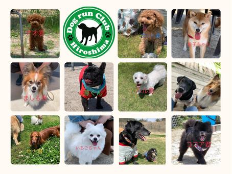ドッグランクラブ広島に沢山の小型犬が遊びにきてくださいました🐶🐶