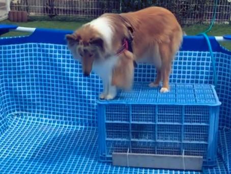 呉 東広島 ドッグランクラブ広島 ドッグプールに水がはいりました🏊♂️