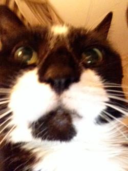 Mittens selfie 2016
