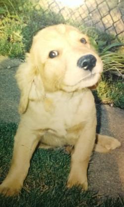 Murphy Puppy