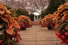 Low View Flowers Pathway.JPG