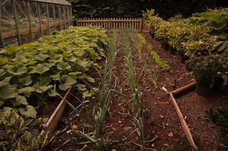 Homegrown Kitchen Garden.JPG