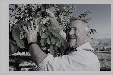 Stemilt Farms: Four generations of cherry-picked goodness