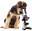 microscope.png