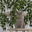Thumbnail: Grand arbre à chat