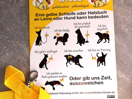 """Aktion """"Gelber Hund""""  - diese Initiative sollten alle Hundebesitzer kennen!"""