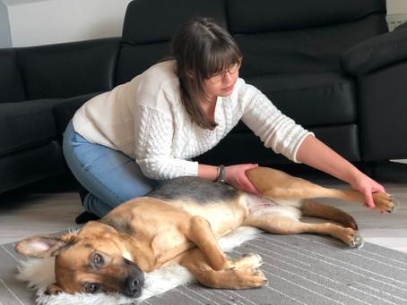 Warum Physiotherapie und Osteopathie für Hunde?
