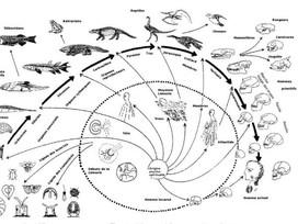Evoluzione dell'uomo e del mondo. Passato, presente e futuro della Terra.