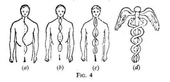 Nadi e caduceo: a) Ida, l'energia discendente nella materia; b) Pinagala, l'energia che ascende nello spirito; c) Sushumna, l'energia centrale che ascende verso lo spirito; d) Ida, pingala e sushumna si intrecciano nei sette chakra, formando il caduceo di Mercurio microcosmico.