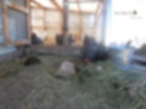 chicken yard and chickens