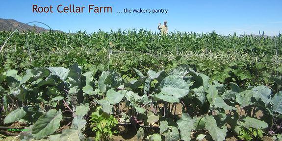 field of organic produce