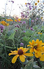 Root Cellar Farm, Flowers of the Bees