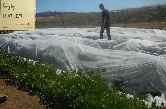 Organic crop row covers.