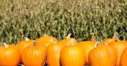 Pumpkin-1_edited