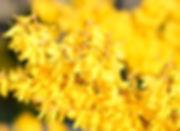 IMG_6223_edited_edited.jpg