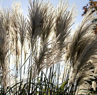 Backlit grass-1.jpg