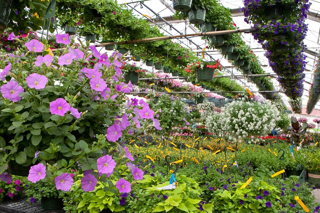 Greenhouse-32