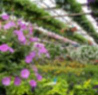 Greenhouse-32.jpg