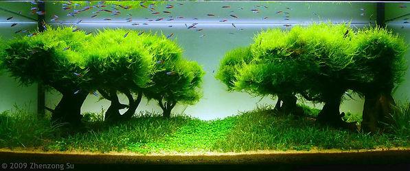 оформление аквариума в рязани