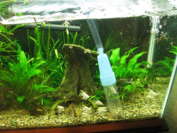 чистка аквариумов в рязани